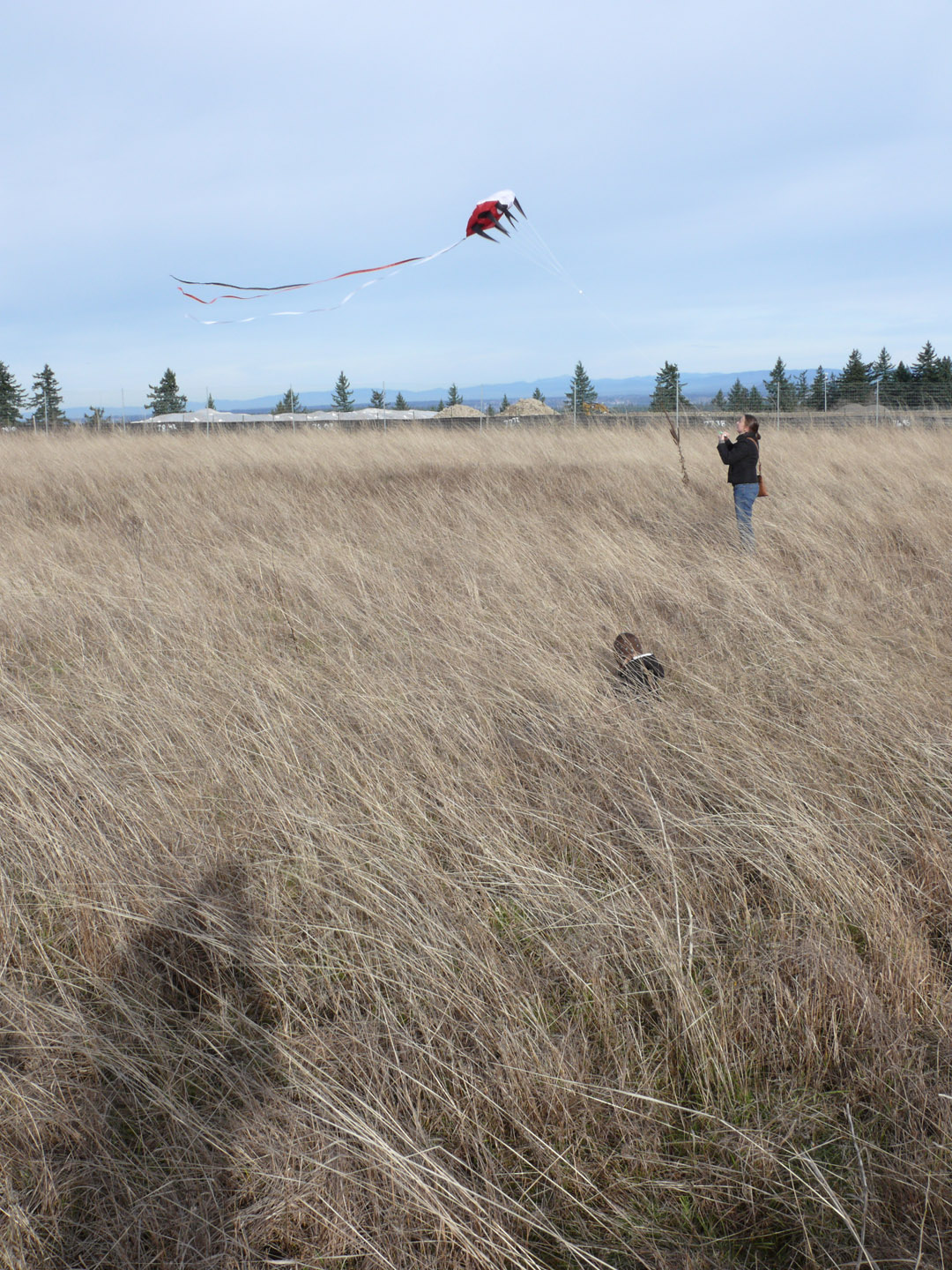Kite flying atop Powell Butte