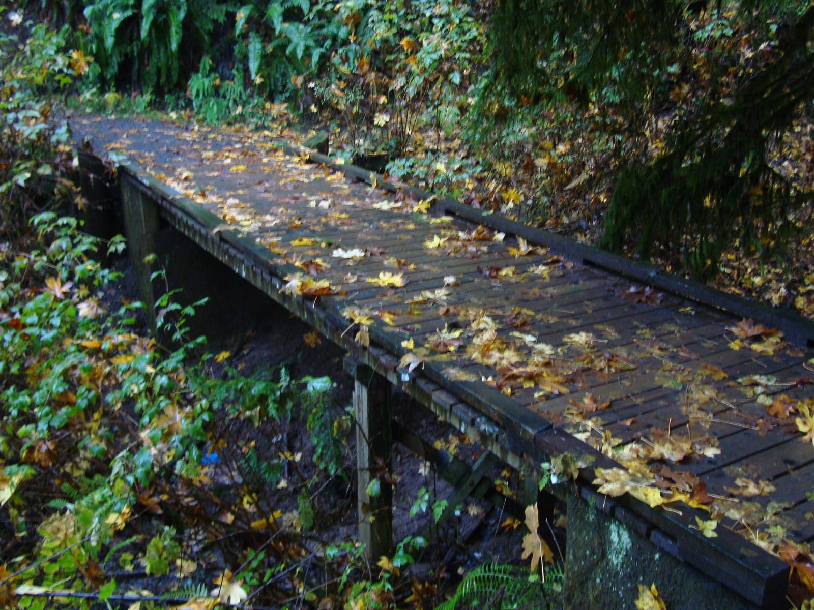 Wooden Creek bridge in Hoyt Arboretum.