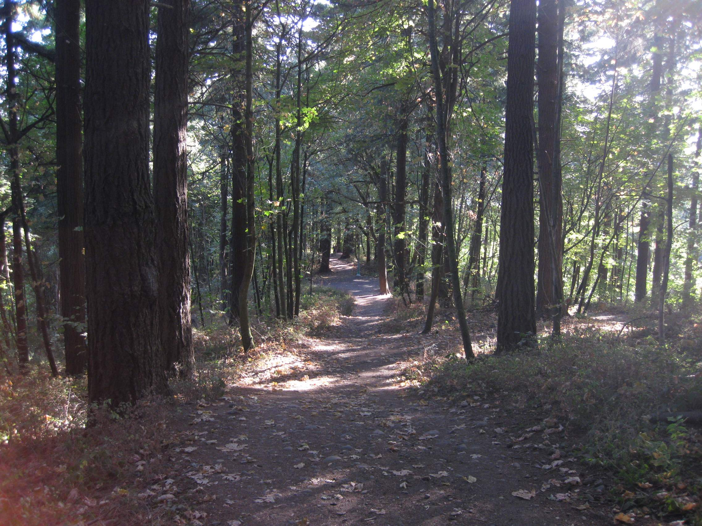 One of several paths through the woods.