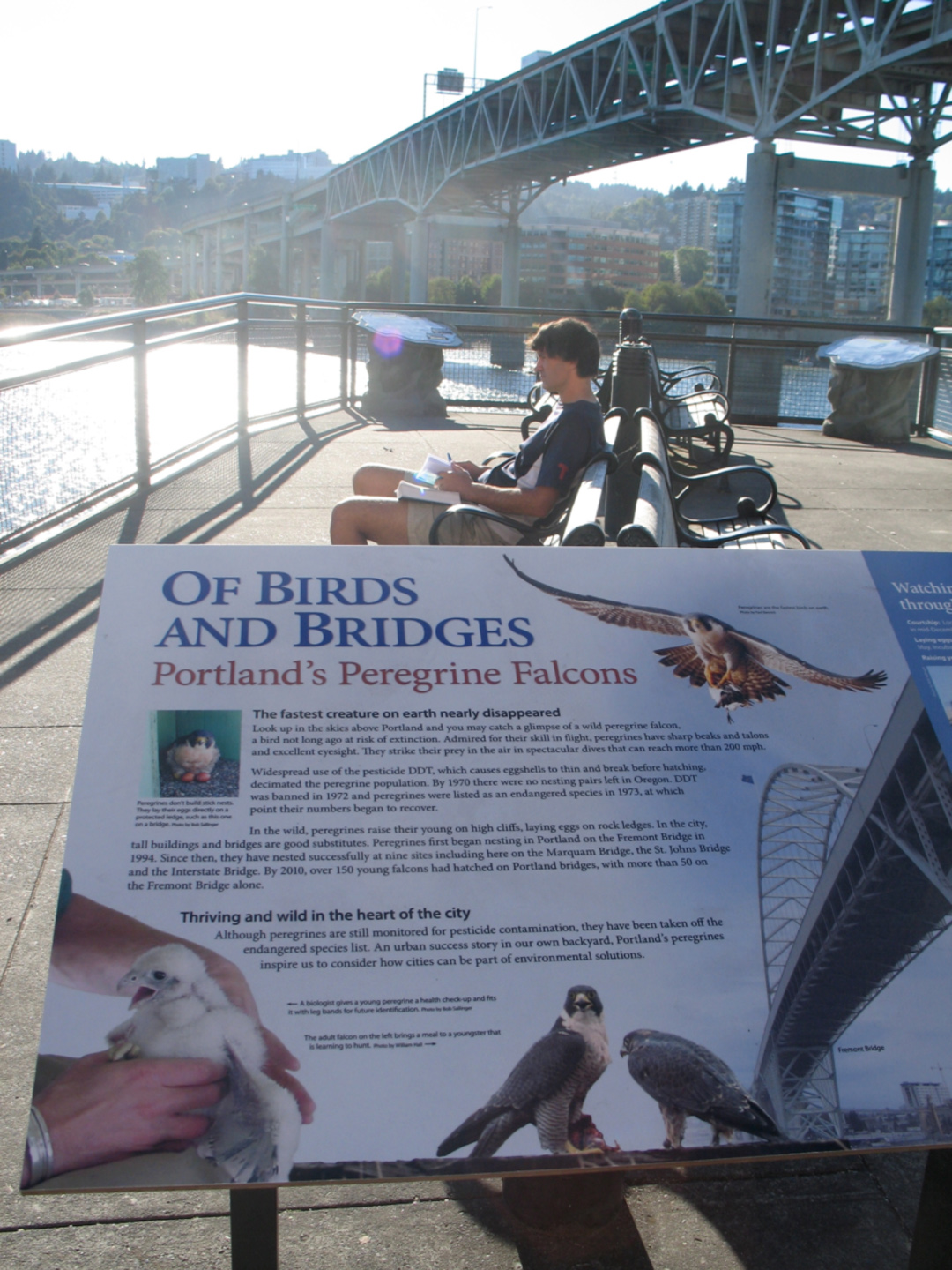 Of Birds and Bridges sign