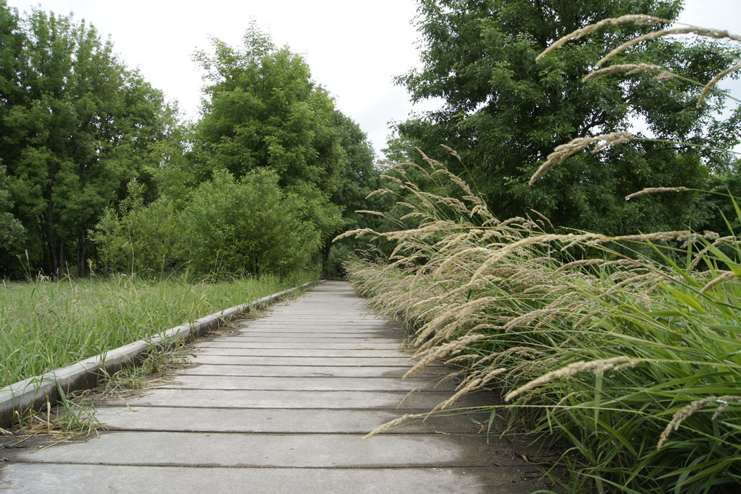 The boardwalk is only wet for about a hundred feet. Then it dries up.