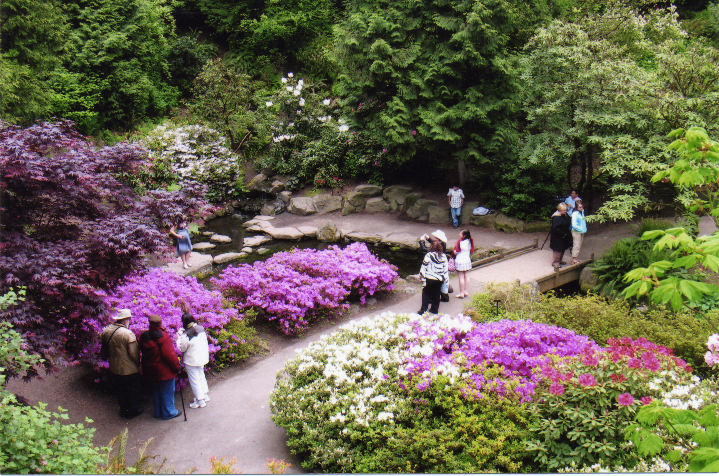 The Rhododendron Gardens. Crystal Springs Lake