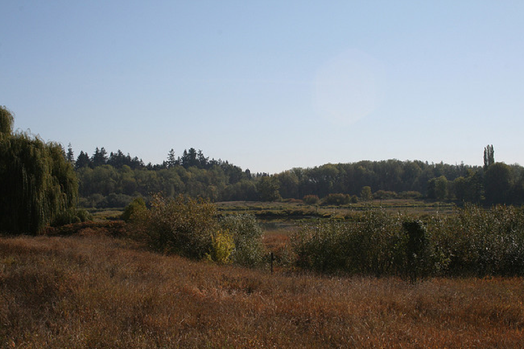 The wetland in late summer