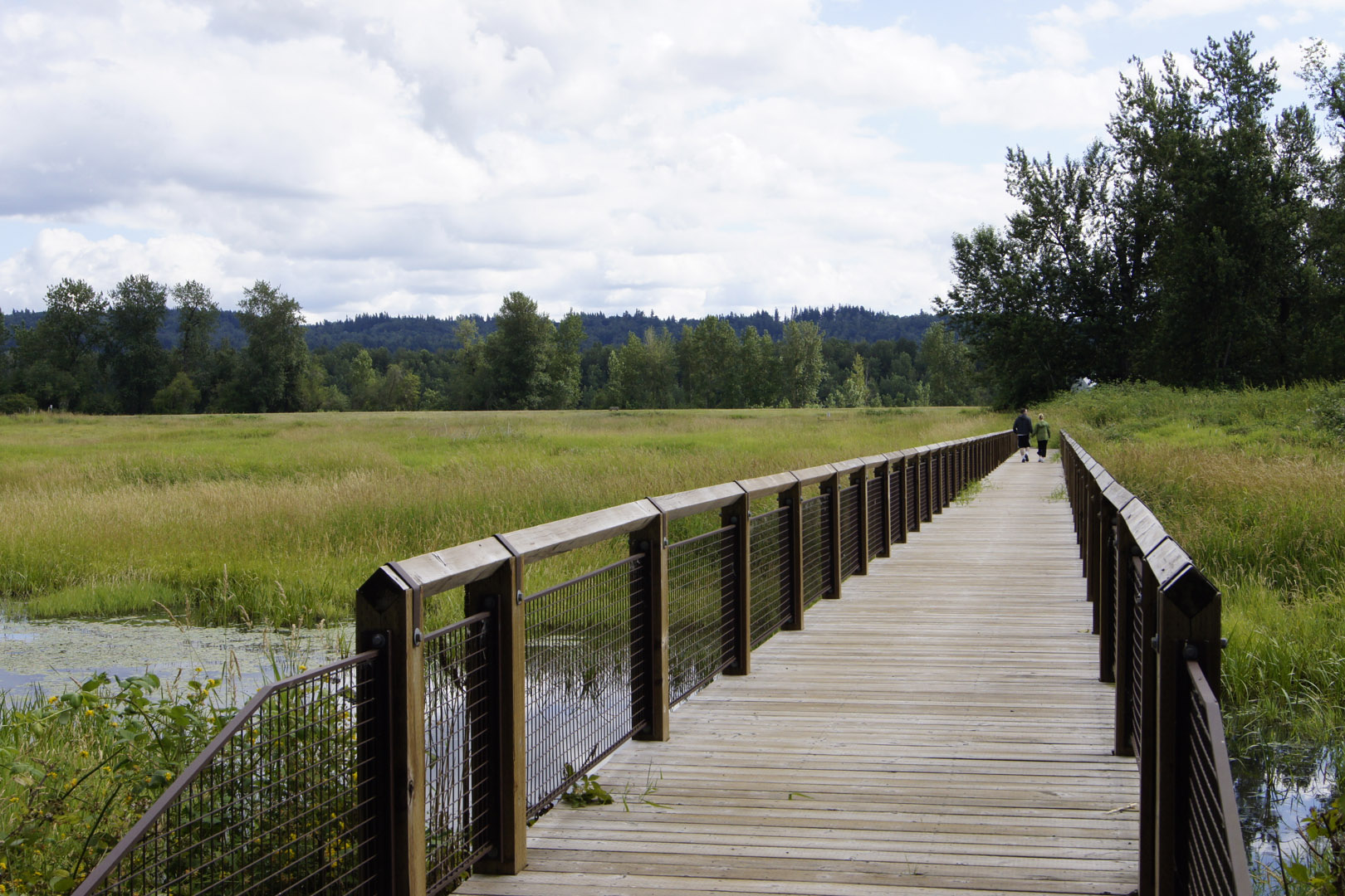 One of several bridges through the wetland areas.