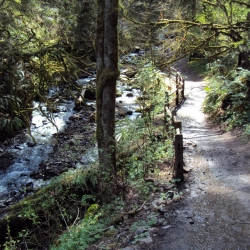 Macleay Park Trail along Balch Creek