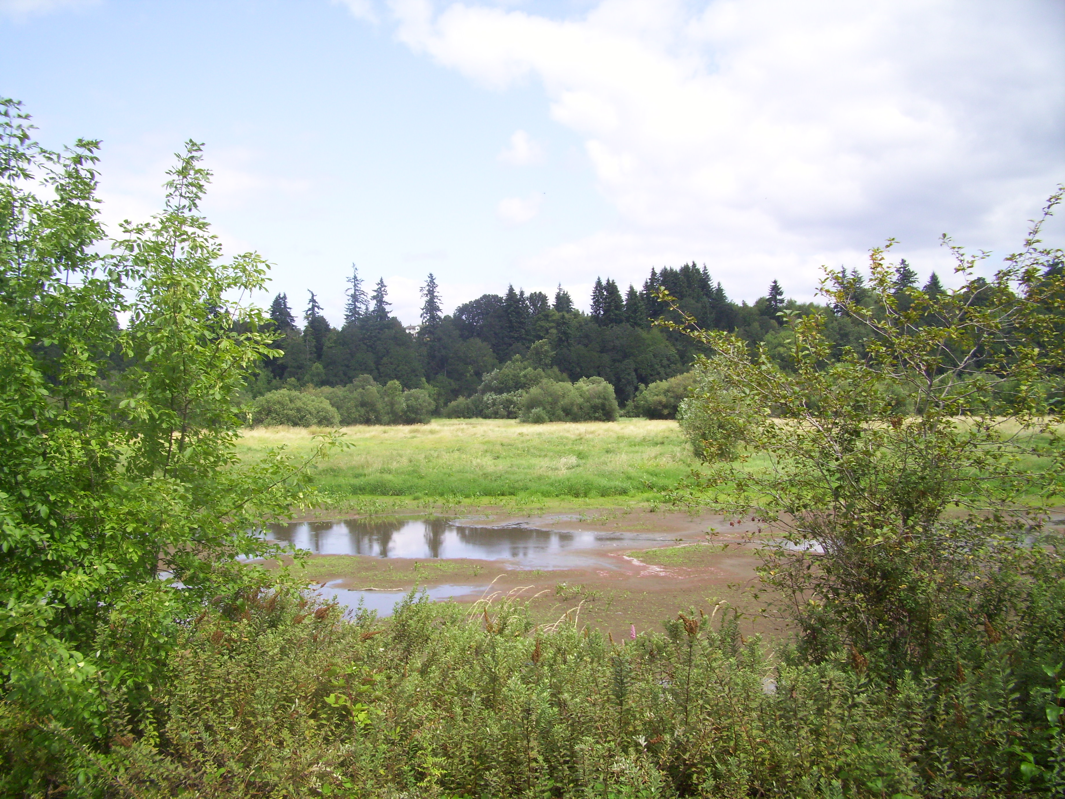 The Salmon Creek wetlands are gorgeous