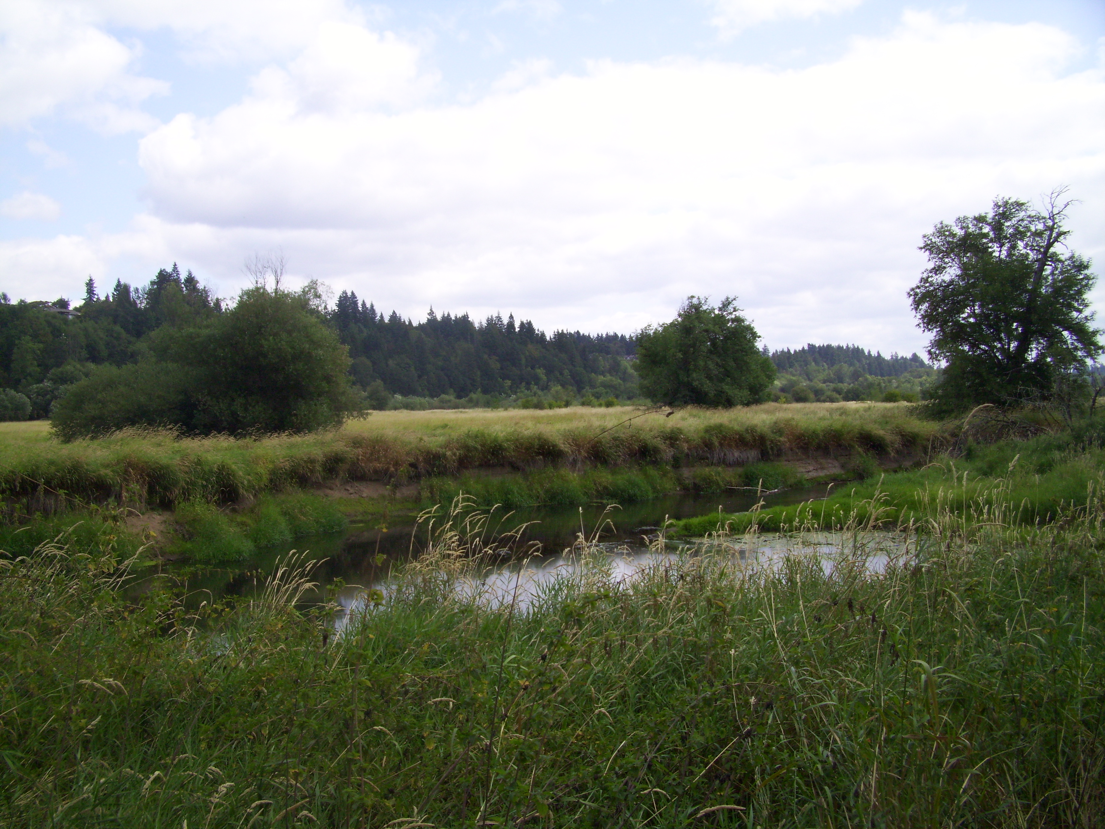 Another view of the Salmon Creek wetlands